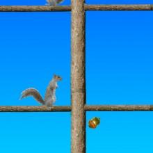 Game Acorn toss
