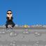 Game Gangnam phiêu lưu