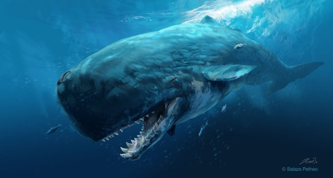 Game Cá voi khổng lồ