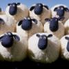 Game Đưa Cừu Qua Sông