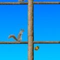 Game Acorn toss, choi game Acorn toss