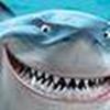 Game Cá mập lên bờ