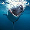 Game Hàm cá mập 2